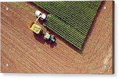 Farm Machines Harvesting Corn For Feed Or Ethanol Acrylic Print by JamesBrey