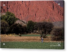 Farmer In Field In Northern Argentina Acrylic Print by James Brunker