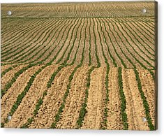 Farmer's Field Acrylic Print by Jim Nelson