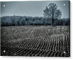 Farmfield Furrows Acrylic Print