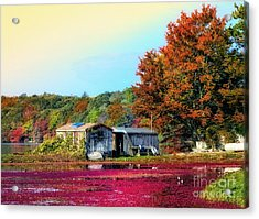 Acrylic Print featuring the photograph Farming Cranberries by Gina Cormier