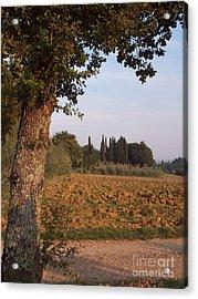 farming in Tuscany Acrylic Print