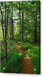 Farmington River Walk No. 1 Acrylic Print