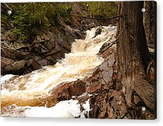 Fast Water And Cedars Acrylic Print by Sandra Updyke