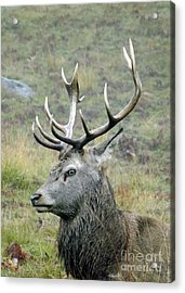 Stag Party The Series Father To Be. Acrylic Print