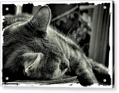 Fatigued Feline Acrylic Print by David Patterson