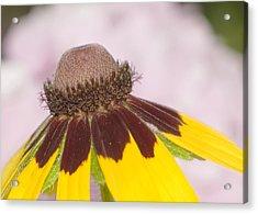 Favorite Flower Acrylic Print by Robert Culver