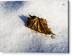 Feather Bed Of Snow Acrylic Print