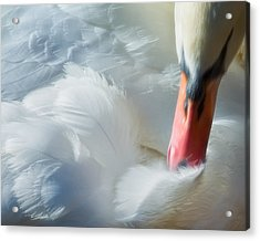 Feather Flufifng Acrylic Print by Joan Herwig