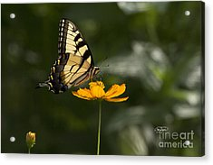 Feather Light Acrylic Print by Cris Hayes