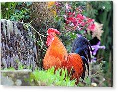 feathered alarm II Acrylic Print