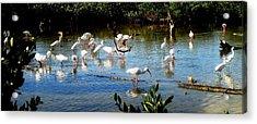 Feathered Coastal Society Acrylic Print by Will Boutin Photos