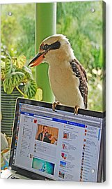 Feathered Facebook Fan Acrylic Print