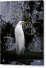 Feathered Fantasy Acrylic Print
