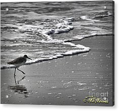 Feathered Friend At The Beach Acrylic Print