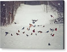 Feathered Friends Acrylic Print by Carrie Ann Grippo-Pike