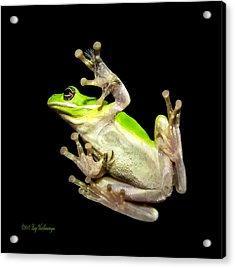 Feathered Frog Acrylic Print
