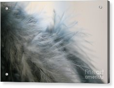 Acrylic Print featuring the photograph Feathered  by Lynn England