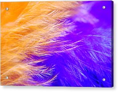 Feathers Acrylic Print