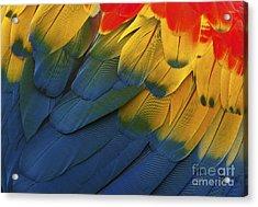 Feathery Details... Acrylic Print by Nina Stavlund