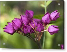 Acrylic Print featuring the photograph February Color by Penny Lisowski