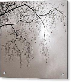 February Sun - Featured 3 Acrylic Print by Alexander Senin