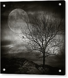 February Tree Acrylic Print by Taylan Apukovska