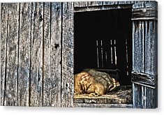 Acrylic Print featuring the photograph Feed Sack In Loft by Greg Jackson