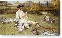Feeding Ducks Acrylic Print by Edward Killingworth Johnson