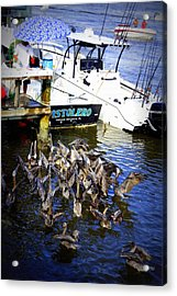Acrylic Print featuring the photograph Feeding Frenzy by Laurie Perry