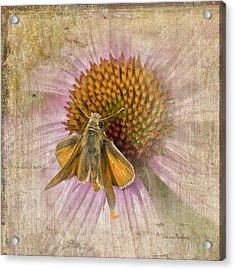 Feeding Moth Acrylic Print
