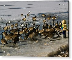 Feeding The Geese Acrylic Print by Matt Radcliffe