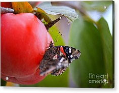 Acrylic Print featuring the photograph Feeding Time by Erika Weber