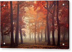 Feel Acrylic Print by Ildiko Neer
