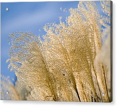 Feel The Breeze Acrylic Print