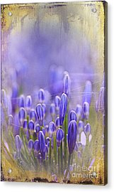 Acrylic Print featuring the photograph Feelin' Blue ... by Chris Armytage