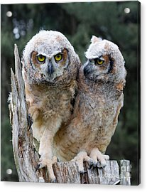 Feeling A Little Grumpy Are We? Acrylic Print by Barbara McMahon