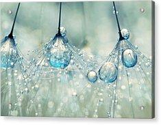 Feeling Blue But Dandy Acrylic Print by Sharon Johnstone