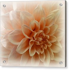 Feeling Peachy Acrylic Print by Faye Symons