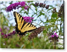 Acrylic Print featuring the photograph Feeling Pretty by Judy Wolinsky