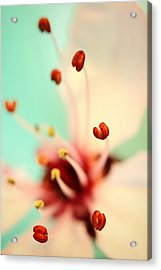 Acrylic Print featuring the photograph Feeling Spring by Sharon Johnstone