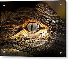 Feisty Gator Acrylic Print