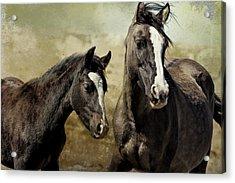 Feldspar And Ohanzee  - Pryor Mustangs Acrylic Print