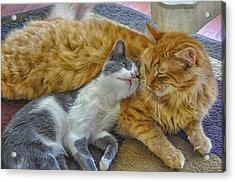 Feline Amore Acrylic Print by Jimi Albert