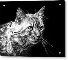 Feline Acrylic Print by Camille Lopez