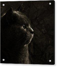 Feline Perfection Acrylic Print by Laura Melis