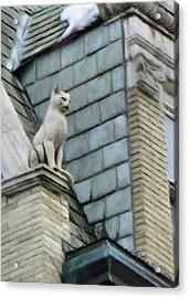 Feline Sentry Acrylic Print by Jeff Kolker