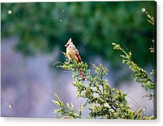 Acrylic Print featuring the photograph Female Cardinal In Snow by Eleanor Abramson