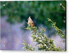 Female Cardinal In Snow Acrylic Print by Eleanor Abramson