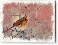 Female Cardinal Portrait Acrylic Print by Dan Friend